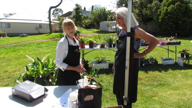 Ready to go: Comboyne's Kay White and Joan Brentnall-Redlich preparing the plant stall for sales.