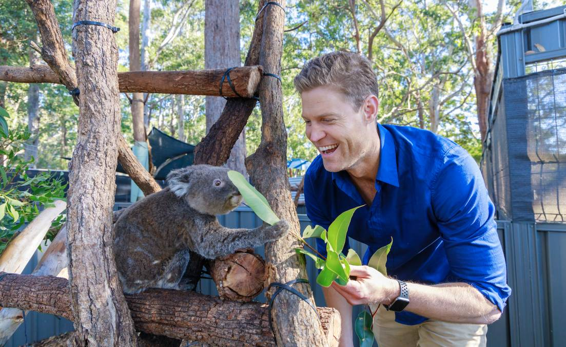 Dr Chris Brown marked World Environment Day at the Port Macquarie Koala Hospital.
